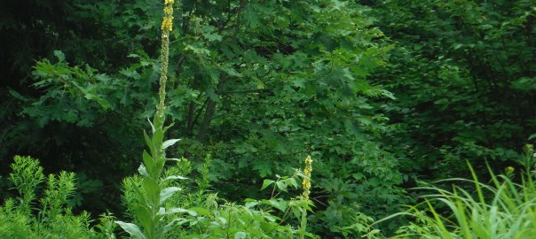 Foraging In Maine  – 2015